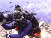 צפו בסרטון מצויר בחינם Palau X-MAS