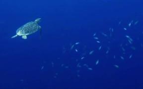 Watch free video Oceans