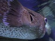 Watch free video National Aquarium in Baltimore
