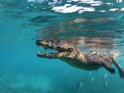 Watch free video The Crocodile and The Hutia