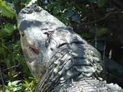 Mira dibujos animados gratis Everglades National Park: Alligator Tales