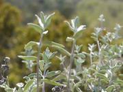 Watch free video White Plants