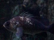 Scary Fish