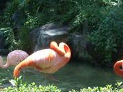 Watch free video Scratching Flamingo