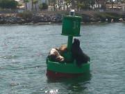 Mira el vídeo gratis de Seals having a Fun Time