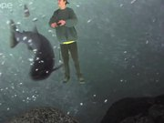 Funny Green Screen videos - Fishy Bears