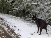 Watch free video Boxer and Snow