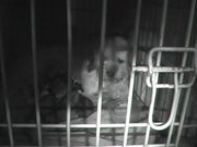 Watch free video Puppies