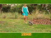 شاهد كارتون مجانا Zeke Leash