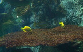 Watch free video Fish Reef