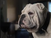 Coldwell Banker Video: Home's Best Friend