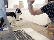 Watch free video Poopy Cat Video: A Day at Poopy Cat Office