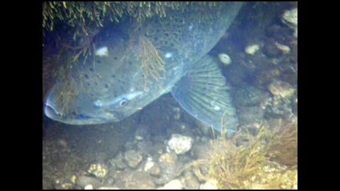 Watch free video Glacier Bay National Park: Waiting For The Feast