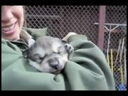 Watch free video Denali National Park: Puppy Paws