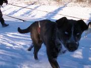 Watch free video Denali National Park: Puppy Paws - On Duty