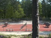 Watch free video France 3 Video: Hippopotame - Tennis