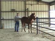 Watch free video Training Saddle