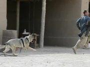 Watch free video Attack Dog