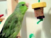 Watch free video Kiwi's Bird Gym