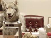 Watch free video Old Spice - Meet Mr Wolfdog 30