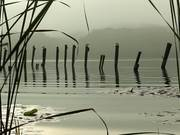 Watch free video Through the Reeds