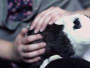 Watch free video Ohio House Rabbit Rescue