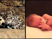 Mira el vídeo gratis de Chattanooga Zoo Commercial