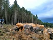 Greno Wood
