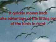 Lesson from Geese