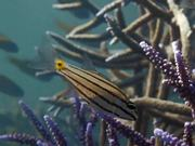Underwater Videography. Showreel