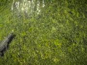 Crocs Chinchorro | Pelagic Life