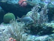 Mira dibujos animados gratis Lonely Fish