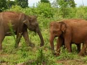 Watch free video Majestic Elephants