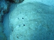 Watch free video Fish on the Sea Bottom