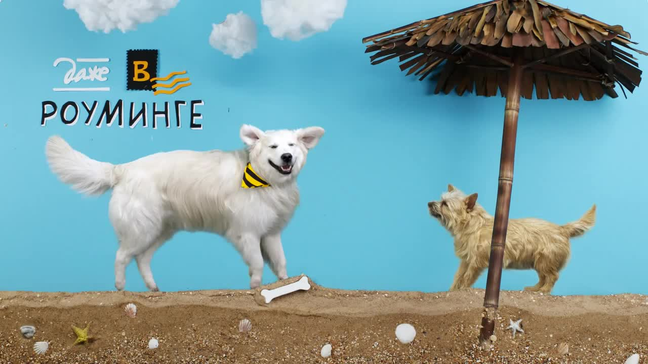 Watch free video Beeline Mobile: Where Is the Dog Buried?