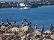 Watch free video Flock of Birds