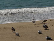 Watch free video Birds at the Beach Side