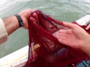 Fishing Shrimp