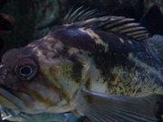 Mira el vídeo gratis de An Odd Fish