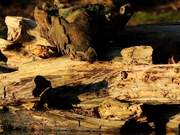 Watch free video Rotting Log on Water Close Up