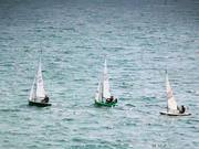 Sailing Dingy's In the Sea
