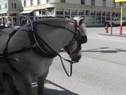 Watch free video Carriage Horse Tourism Alaska Mohr Productions