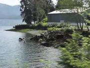 Watch free video Drive By Birds In Water Alaska