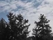 Watch free video Eagle In Tree Zoom In Shadow Alaska