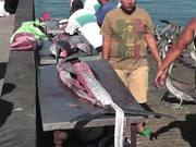 Watch free video Swordfish Cutting Up Cabo San Lucas