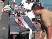 Mira dibujos animados gratis Swordfish Cutting Up Cabo San Lucas