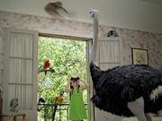 צפו בסרטון מצויר בחינם Google Video Bird Watcher