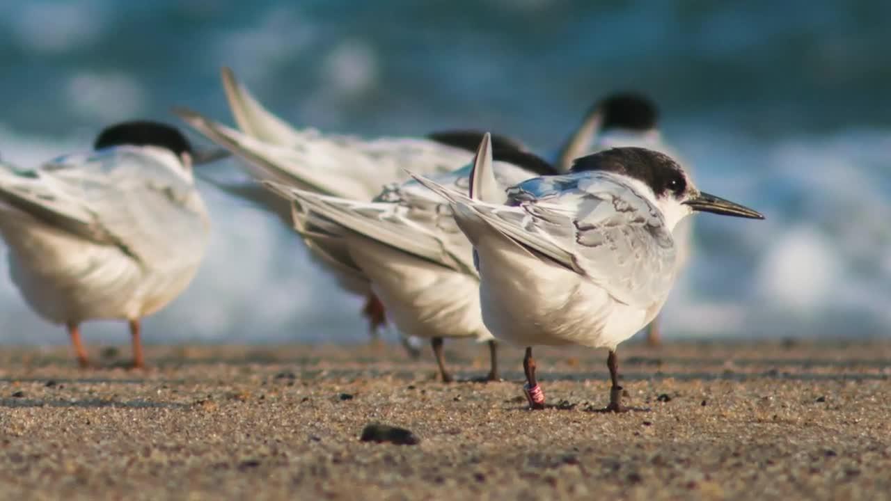 Watch free video Cape Cod NS: Shorebirds at the Seashore