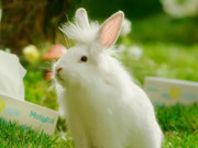 Watch free video Mototol Commercial: Bunnies