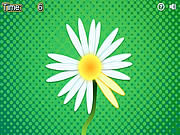 Daisy Petals game